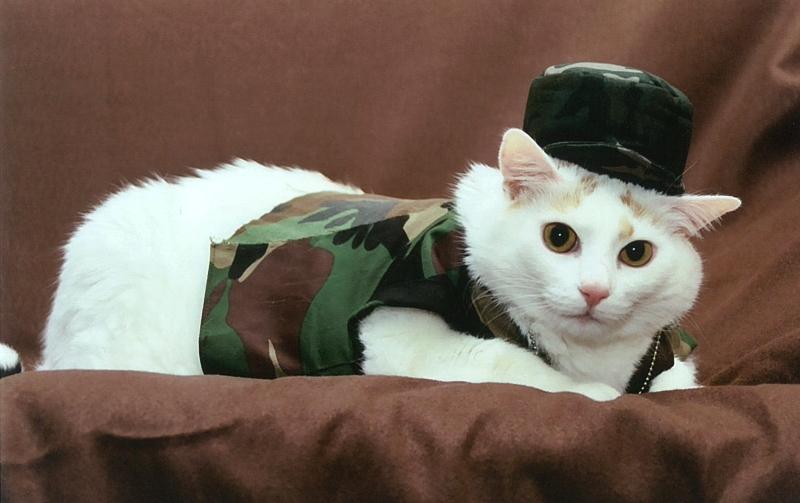 Soldier Sugar