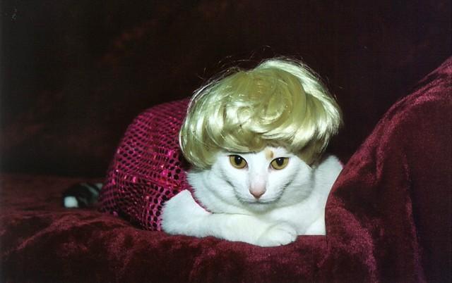 Marilyn Monroe Sugar